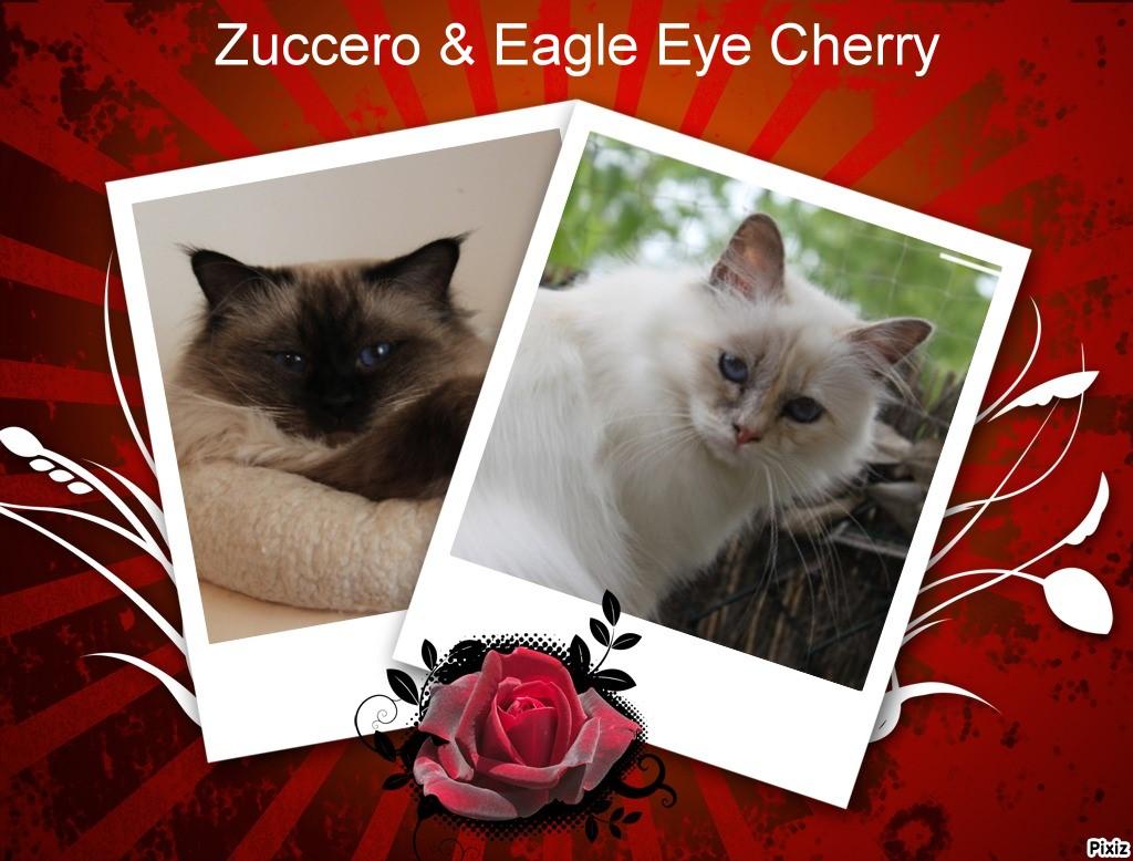 L'unique chatonne d'Eagle Eye Cherry et Zuccero Pixiz_516a5a59dfe70
